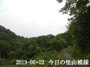 2019-06・02 今日の里山模様・・・ (8).JPG