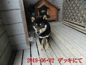 2019-06・02 今日の麻呂 (6).JPG