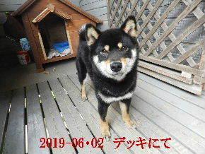 2019-06・02 今日の麻呂 (7).JPG