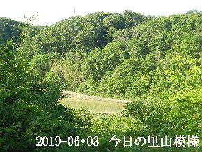 2019-06・03 今日の里山模様・・・ (3).JPG