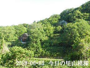 2019-06・03 今日の里山模様・・・ (4).JPG
