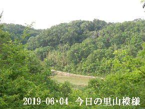 2019-06・04 今日の里山模様・・・ (3).JPG