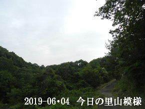 2019-06・04 今日の里山模様・・・ (8).JPG