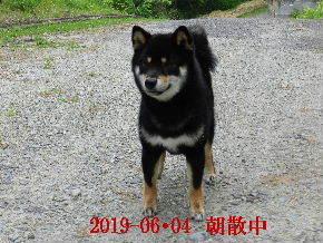 2019-06・04 今日の麻呂 (2).JPG