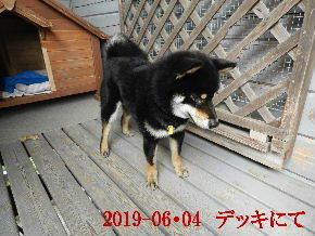 2019-06・04 今日の麻呂 (6).JPG