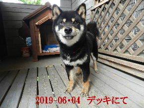 2019-06・04 今日の麻呂 (8).JPG