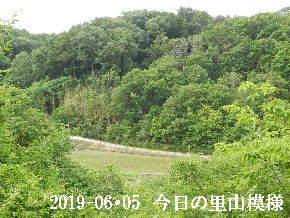 2019-06・05 今日の里山模様・・・ (3).JPG