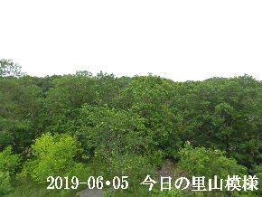 2019-06・05 今日の里山模様・・・ (6).JPG