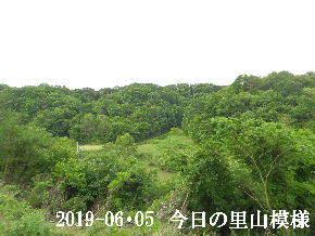 2019-06・05 今日の里山模様・・・ (7).JPG