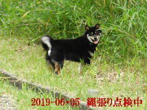2019-06・05 今日の麻呂 (1).JPG