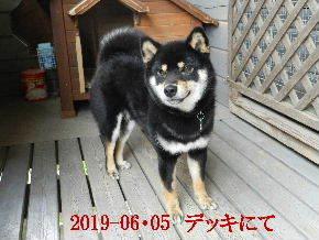 2019-06・05 今日の麻呂 (7).JPG