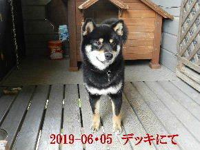 2019-06・05 今日の麻呂 (8).JPG
