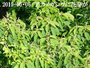 2019-06・06 今日の出遭い・・・ (2).JPG
