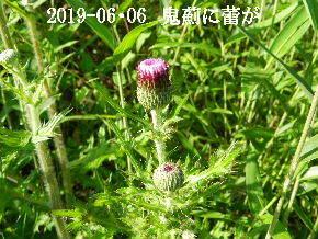 2019-06・06 今日の出遭い・・・ (5).JPG