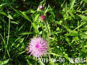 2019-06・06 今日の出遭い・・・ (6).JPG