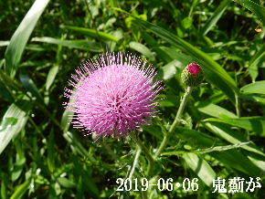 2019-06・06 今日の出遭い・・・ (7).JPG