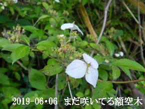 2019-06・06 今日の出遭い・・・ (8).JPG