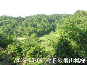2019-06・06 今日の里山模様・・・ (7).JPG