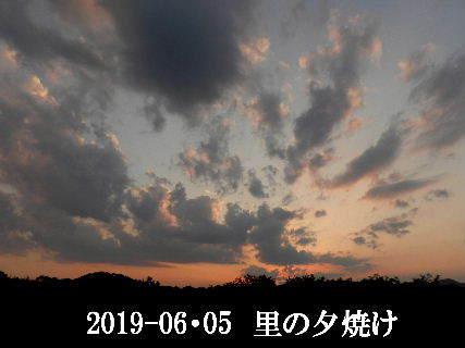 2019-06・06 里の夕暮れ時・・・ (1).JPG