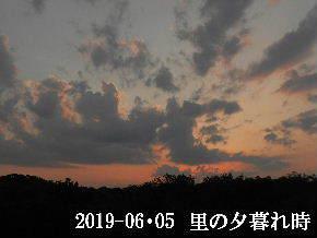 2019-06・06 里の夕暮れ時・・・ (3).JPG