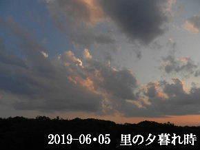 2019-06・06 里の夕暮れ時・・・ (4).JPG