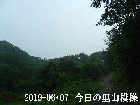 2019-06・07 今日の里山模様・・・ (10).JPG