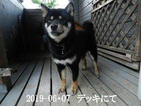 2019-06・07 今日の麻呂 (1).JPG