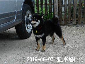 2019-06・07 今日の麻呂 (8).JPG