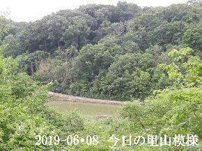 2019-06・08 今日の里山模様・・・ (3).JPG