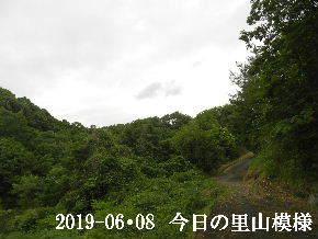 2019-06・08 今日の里山模様・・・ (8).JPG