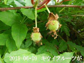 2019-06・09 今日の出遭い・・・ (3).JPG