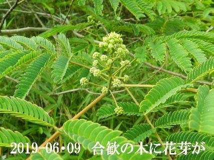 2019-06・09 今日の出遭い・・・ (9).JPG
