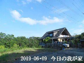 2019-06・09 今日の里山模様・・・ (1).JPG
