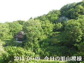 2019-06・09 今日の里山模様・・・ (4).JPG
