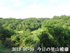 2019-06・09 今日の里山模様・・・ (7).JPG