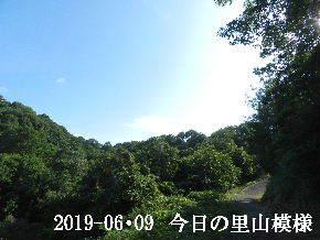 2019-06・09 今日の里山模様・・・ (8).JPG