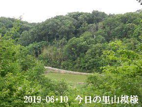 2019-06・10 今日の里山模様・・・ (3).JPG
