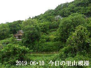 2019-06・10 今日の里山模様・・・ (4).JPG