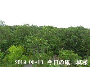 2019-06・10 今日の里山模様・・・ (6).JPG