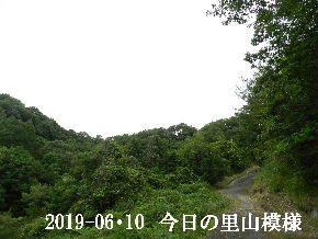 2019-06・10 今日の里山模様・・・ (8).JPG