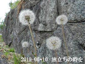2019-06・10 今日の麻呂 (1).JPG