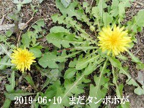 2019-06・10 今日の麻呂 (6).JPG