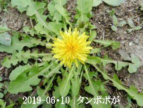 2019-06・10 今日の麻呂 (7).JPG