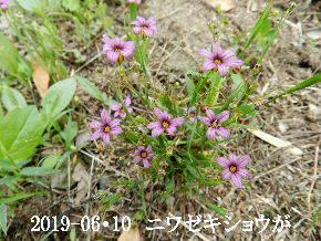 2019-06・10 今日の麻呂 (8).JPG