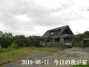 2019-06・11 今日の里山模様・・・ (1).JPG