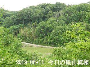 2019-06・11 今日の里山模様・・・ (3).JPG