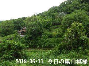 2019-06・11 今日の里山模様・・・ (4).JPG