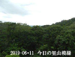 2019-06・11 今日の里山模様・・・ (5).JPG