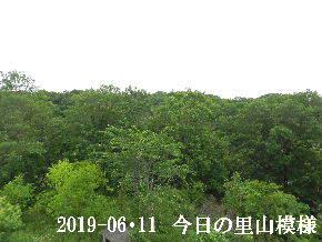 2019-06・11 今日の里山模様・・・ (6).JPG