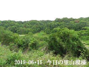 2019-06・11 今日の里山模様・・・ (7).JPG